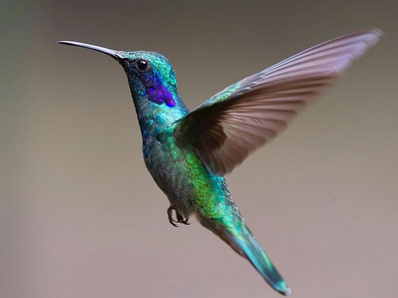 Avistaje de Aves  en Villa La Angostura