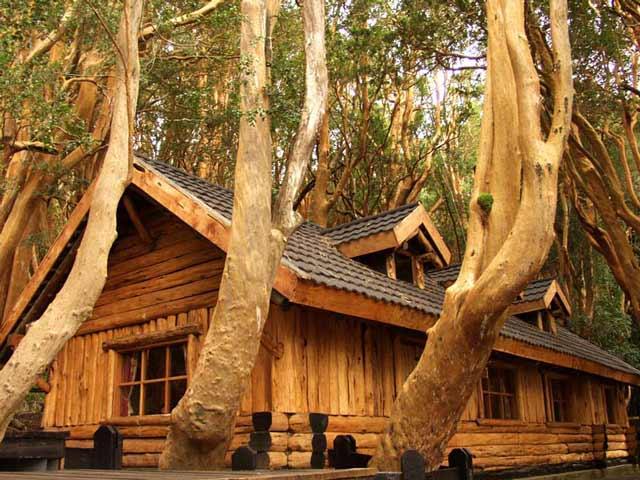 Bosque de Arrayanes en Villa La Angostura